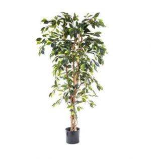 Artificial Ficus Tree available for hire in Sydney.