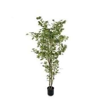 Artificial Ginko Tree Stock Image.