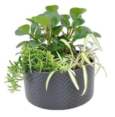 Succulent and Cacti Arrangement